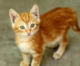 orange cats i loved my cat and i lost him because of my family