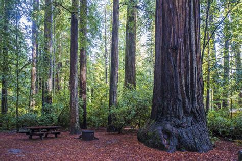 Jedediah Smith Redwoods Best Campgrounds California