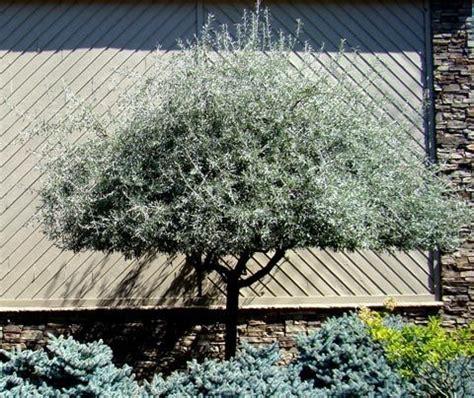 welke fruitboom in de tuin door de bomen de tuin blijven zien