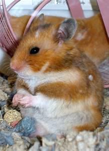 hamster cage   Choose Hamster Cages