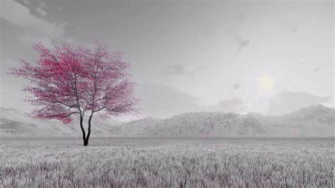 monochrome fantasy spring landscape  single pink