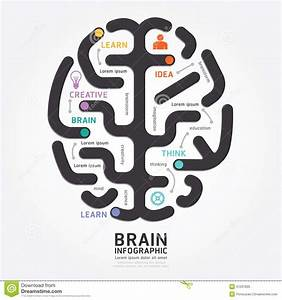 Infographics Vector Brain Design Diagram Line Style  Stock