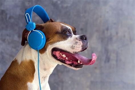 stressed dogs prefer reggae  soft rock mnn mother