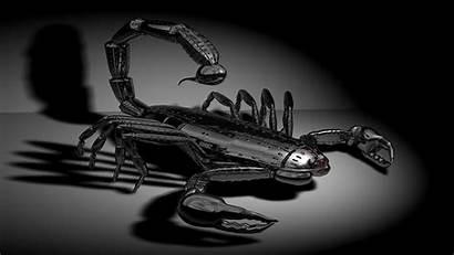 Scorpion Desktop Wallpapers Backgrounds 1080 Wiki Windows