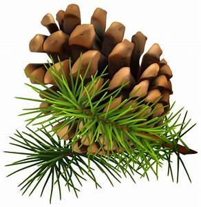 Pine Cone PNG Clip-Art Image   Graphics   Pinterest   Pine ...