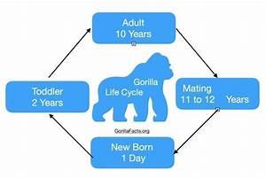 26 Life Cycle Of A Polar Bear Diagram