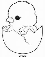 Chick Coloring Pages Easter Chicken Baby Printable Chicks Template Egg Cute Chook Sheets Sheet Templates Adorable Ever Most Crafts Chickens sketch template
