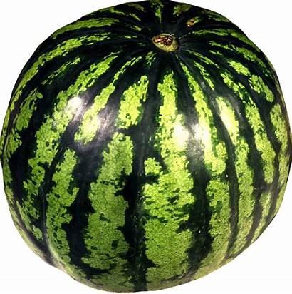Watermelon Pngimg