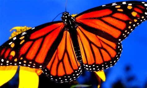 santuarios  visitar  la mariposa monarca en