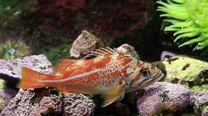 Vancouver Aquarium :: Why Support Us?