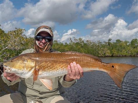 redfish florida fishing snook species keys fri november