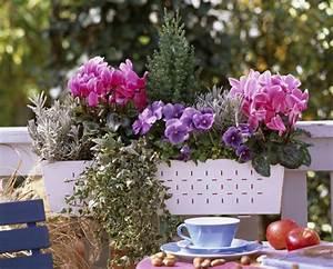 Plantes D Hiver Extérieur Balcon : charmant plantes d hiver pour balcon 12 choisir une ~ Nature-et-papiers.com Idées de Décoration