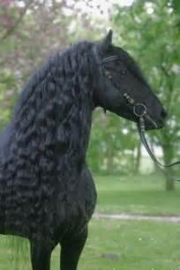 Beautiful Horses Black Horse