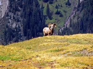 Po Stands For by Pocaterra Ridge Kananaskis Country Hiking Alberta