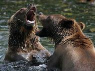 Crazy Wild Animals
