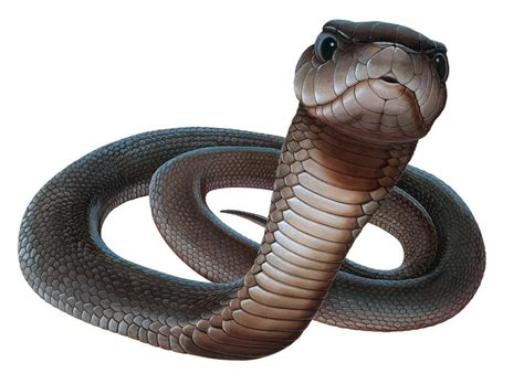 Top 16 Most Dangerous Black Mamba Snake Wallpapers In Hd