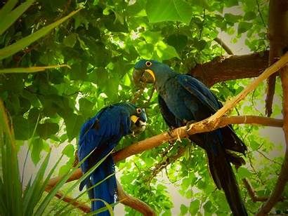 Birds Rainforest Hyacinth Exotic Nature Macaws Zoo