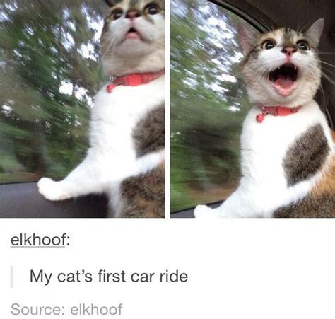 Funny Cat Memes Tumblr - cat cute funny meme tumblr image 3649953 by lauralai on favim com