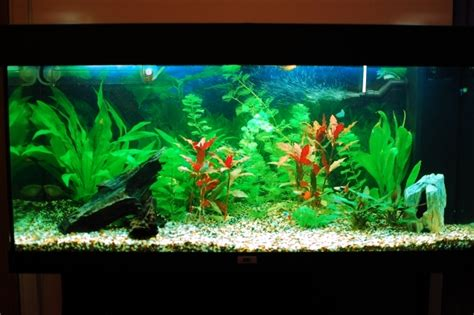 100 ideas integrate aquarium designs in the wall or in the