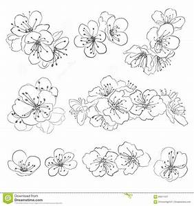 Dessin Fleur De Cerisier Japonais Noir Et Blanc : ensemble de fleurs de cerisier de dessin t l charger ~ Melissatoandfro.com Idées de Décoration