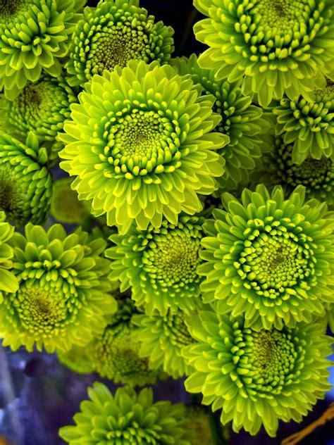 green kermits types  flowers planting flowers