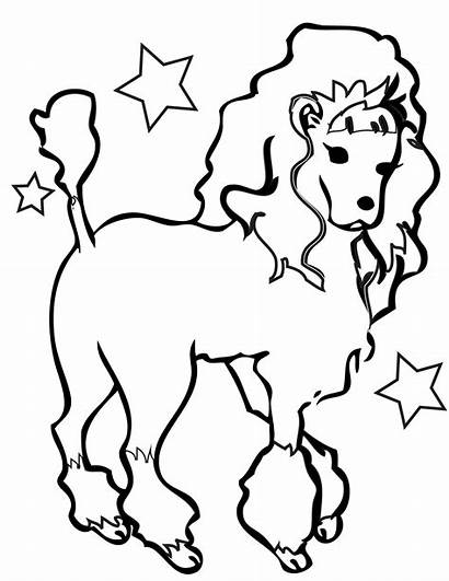 Coloring Poodle Pages Toy Printable Fresh Sheet