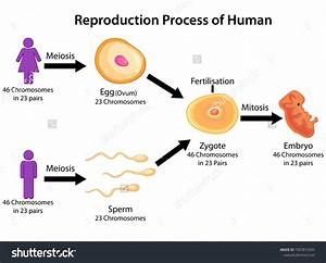 Education Chart Of Biology For Reproduction Process Of
