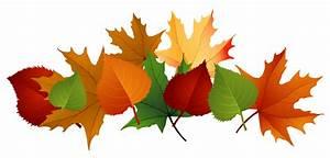 Autumn Leaves PNG Transparent Image PNG Mart