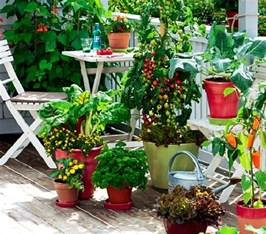 kitchen gardening ideas how to start a balcony kitchen garden complete guide balcony garden web