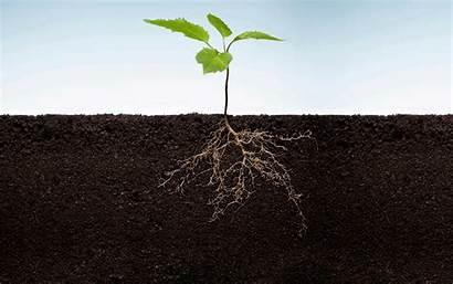 Roots Nrg Behance