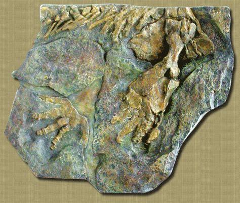 Ichthyostega stensioei