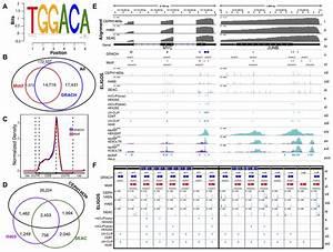 Epitranscriptional Landscape Analysis Of Human Cells Using
