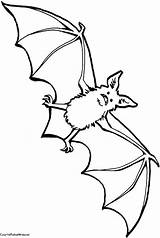 Bat Coloring Drawings Pages Comments sketch template
