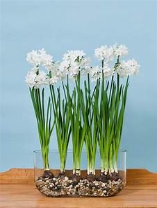 Paperwhite Ziva in Windowsill Vase White Flower Farm