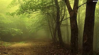 Fog Forest Wallpapersafari Earth Youwall Wallpaperwallpapersfree