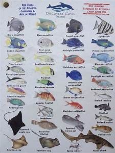 Second Page Of The Chart Showing Fish You Can See In The
