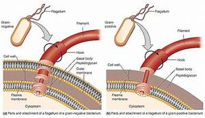 Complex Flagella