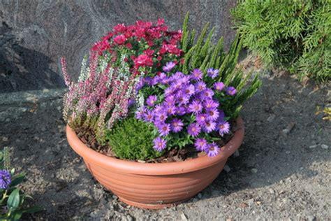 Was Ist Eine Solitärpflanze by Pflanzgef 228 223 E Was F 252 R Unterschiede Gibt Es