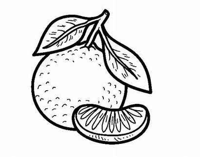 Tangerine Coloring Colouring Pages Sour Sweet Colorear