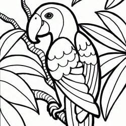 HD wallpapers coloriage perroquet a imprimer gratuit