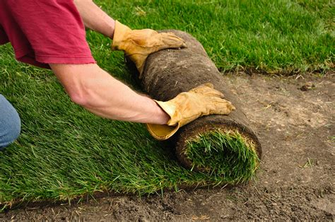 when to lay sod image gallery laying sod