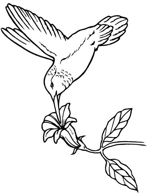 birds hummingbird animals coloring pages coloring book