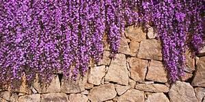 Blumen Für Steingarten : die besten ideen f r den steingarten ~ Markanthonyermac.com Haus und Dekorationen
