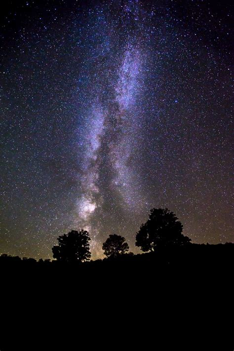 Silhouette Of Trees Under Milky Way Galaxy Photo Free