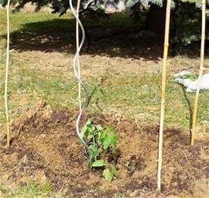 Comment Tuteurer Les Tomates : la plantation des tomates le blog d 39 initiatives ~ Melissatoandfro.com Idées de Décoration