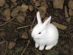 ウサギ:ウサギさん : 陸のくじらぶろぐ