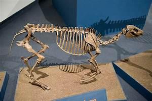 Of Horse Skull