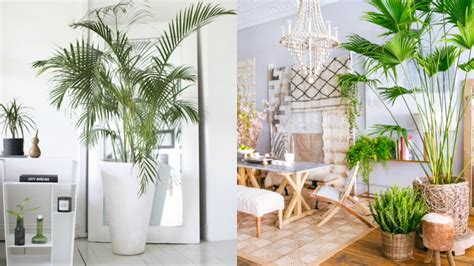 How to decorate with tropical style