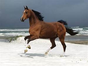 Pictures Blog: Beautiful Horses Running on The Beach