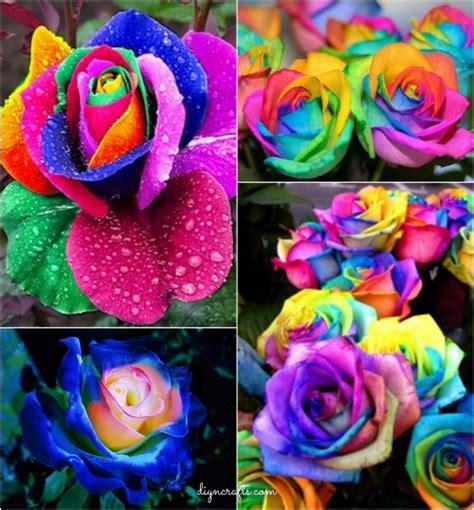 diy colorful rainbow roses step  step video